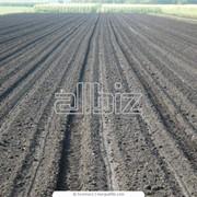 Подготовка почвы к посевам фото