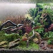Чистка аквариумов Киев, Киевская область фото