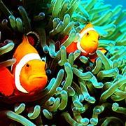 Морские рыбы для аквариума фото