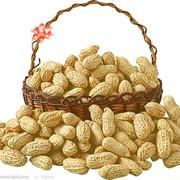 Арахис. Орехи в ассортименте. Фундук, миндаль, кешью, грецкий орех. Опт. Запорожье, область, Украина. фото