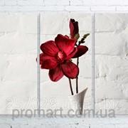 Модульна картина на полотні Червона квітка в білій вазі код КМ100150-032 фото