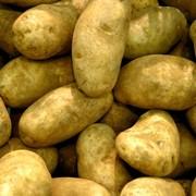 Купить картофель в Украине фото