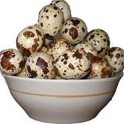 Перепелині яйця фото