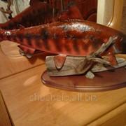 Экспозиция рыбы нерка фото
