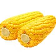 Оборудование для варки кукурузы фото