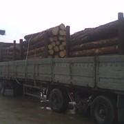 Услуги лесовоза фото