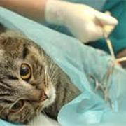 Хирургия любого уровня сложности, травматология г.Киев фото
