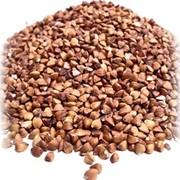 Переработка зерна гречихи фото