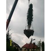 Пересадка крупномерных деревьев фото