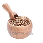 Coriander Seeds фото