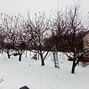 Обрезка плодовых деревьев и кустарников фото