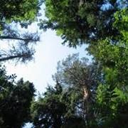 Насадження дерев на дачах, садибних ділянках та догляд за ними. фото