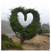 Стрижка деревьев фото