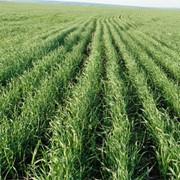 Інсектицид Бі-58 новий 40% к.е. , Басф, 4*5 л/овочеві, зернові та технічні к-ри фото
