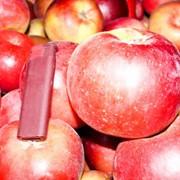 Яблоки сорта Алеся, Вербное, Айдаред, Глостер, Лигол фото