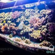 Услуги по подбору декораций для аквариумов фото