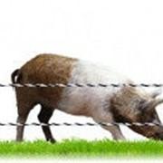 Комплект для Свиньи 500 метров фото