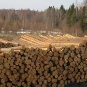 Поставка пиломатериалов из разных пород древесины фото