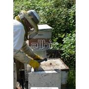 Поилки для пчел, все для пасеки фото