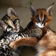 Продажа экзотических и редких животных фото