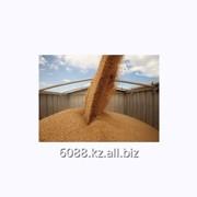 Услуги производства корма и муки фото