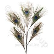 Декор Перо павлина зеленое 50x28cм фото