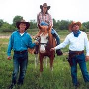 Прокат лошадей в крытом манеже фото