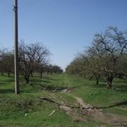 Участок Макаровский р-н, с. Колонщина, 3.25 га фото