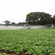 Поливные штанги, Briggs, оборудование поливное сельскохозяйственное фото