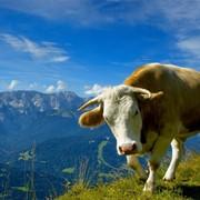 Мясо говядина и конина фото
