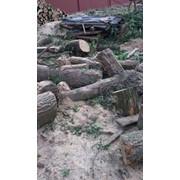 Уборка земельного участка от зарослей фото