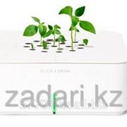 Базилик Click and Grow фото