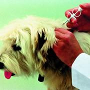 Чипирование домашних животных фото