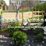Уход за растениями. Уход, консультации, услуги садовника. фото
