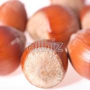 Орех фундук бланшированный оптом из Турции фото
