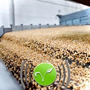 Очистка зерна вибростолом фото