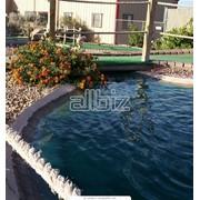 Декоративные водоемы, искусственные водоемы, создание прудов, создание водоемов, строительство прудов, пруд на садовом участке. фото