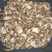 Белые сушенные грибы фото