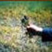 Лабораторный анализ почв с целью выявления типа сорняков и подбор наиболее выгодных систем уничтожения сорняков фото