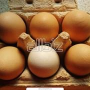 Яйцо украинское фото