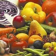Семена для овощеводства фото