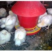 Кормушки бункерного типа, купить, Кривой Рог для цыплят фото
