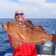 Тур рыбалка в Персидском заливе, ОАЭ фото