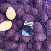 Картофель оптом 5+ сорт Розара  фото
