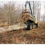 Хлыстовая лесозаготовка Остерское лесное хозяйство, ДП фото
