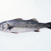 Паштеты рыбные фото
