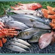 Морепродукты фото