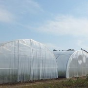 Теплицы фермерские (туннельные) один слой пленки 200 мкр фото