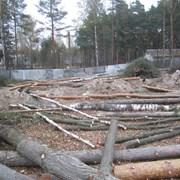 Удаление деревьев,расчистка участка Киев и область фото