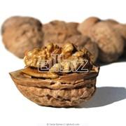 Орехи грецкие купить в Украине фото